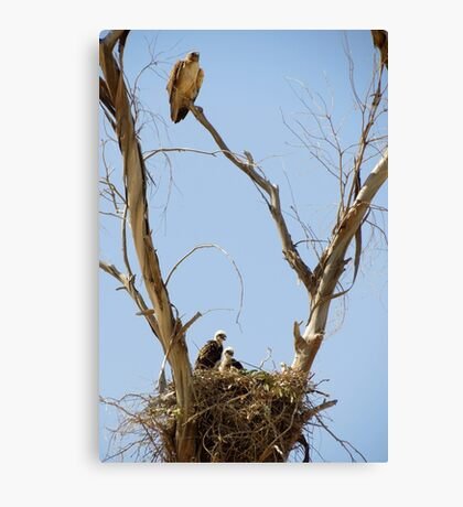 Red-tailed Hawks ~ Watchful eye Canvas Print