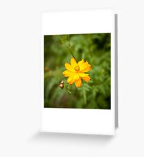 Native Korean Greeting Card