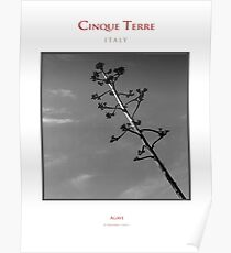 Cinque Terre - Agave Poster