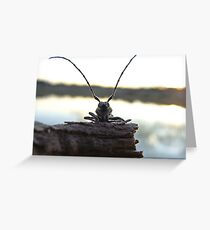 Thunder Beatle Greeting Card