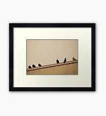 New York City, Pigeons Framed Print