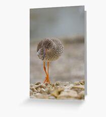 Redshank.. Greeting Card