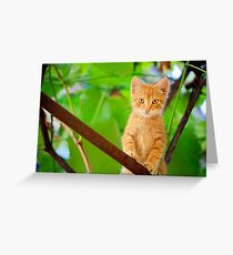 Young Kitten Sitting On Branch Greeting Card