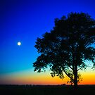 Sunset With A Silhouette Of A Lonely Tree by GrishkaBruev