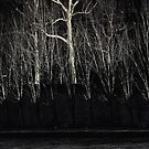 The Midnight Forest by 1morephoto