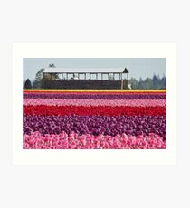 A Rainbow of Tulips Art Print