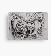 Abstracted Pelvis Canvas Print