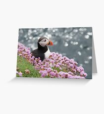 Puffin at Rest Greeting Card