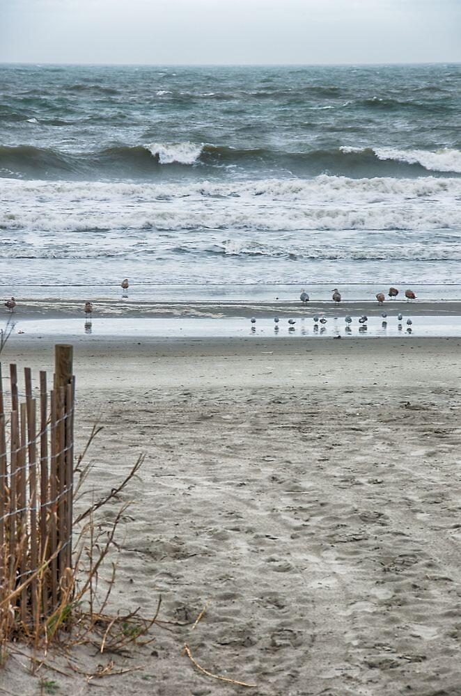 Wave Watchers by Lynn Armstrong