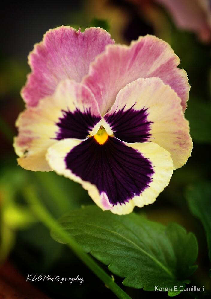 Viola Tricolor by Karen E Camilleri