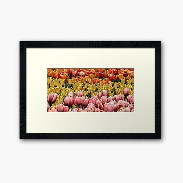 Color Of Tulips Framed Art Print