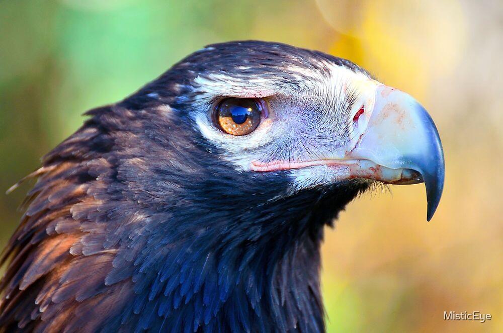 Wedged Tail Eagle  Tasmania by MisticEye