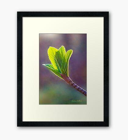 Spring at Last - Baby Siebold Viburnum Leaves Framed Print
