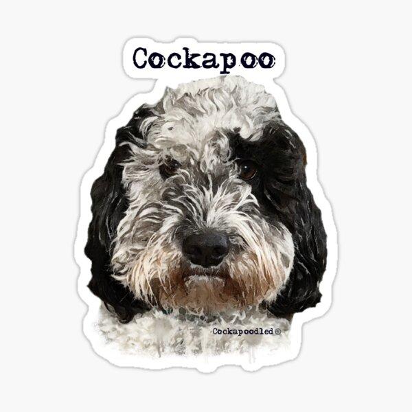 Black and White Cockapoo Dog  Sticker
