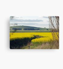 Canola Fields Canvas Print