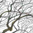 Tree by Katerinka