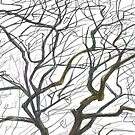 Tree B&W by Katerinka