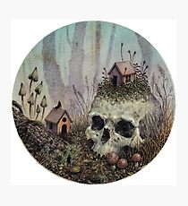Little Forest Spirits  Photographic Print
