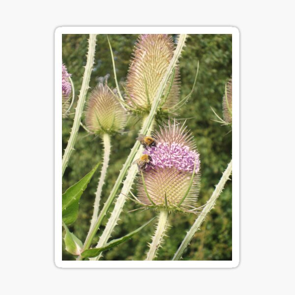 Bee Teazled Sticker