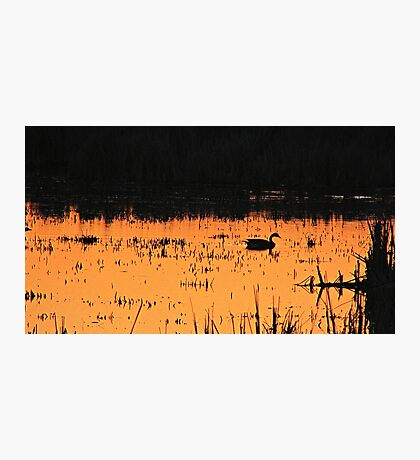 Sunset Swim Photographic Print