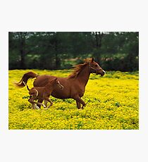 Baby Horse Running Photographic Print