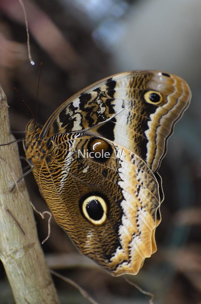 owl butterfly by Nicole W.