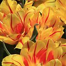 Garden Flower by Gene Praag