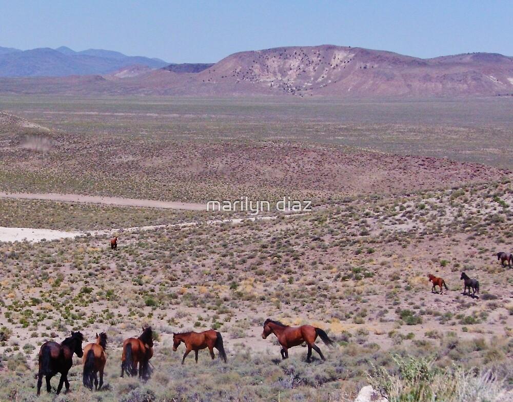 Mustang Territory by marilyn diaz