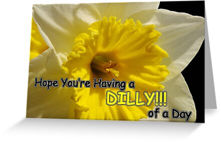 daffy dilly of a day by dedmanshootn