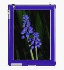 grape hyacinth case iPad Case/Skin