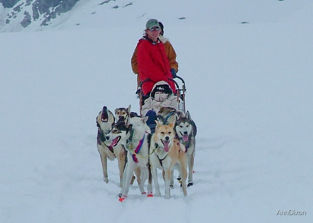 Dog Sledding by AnnDixon