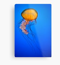 Jellyfish! Metal Print