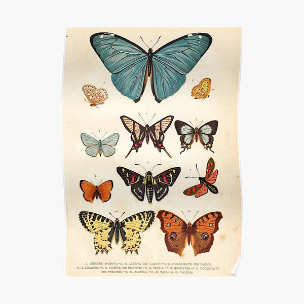 Vintage Indie Butterfly Poster Poster