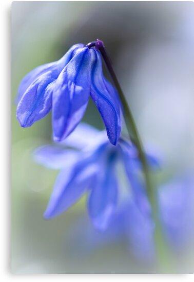 Blues.... by Bob Daalder
