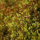 moss spores by wolf6249107