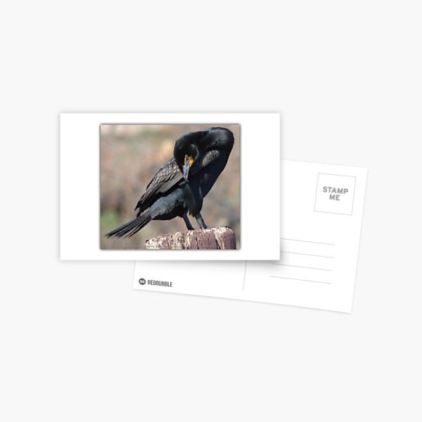 Doubled-crested Cormorant 1 of 6 Postcard