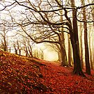 Autumn Wood. by Maybrick