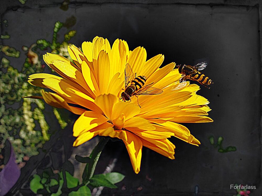 Yellow Flower  by Forfarlass