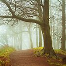 Clent Hills, Fall Colors. by Maybrick
