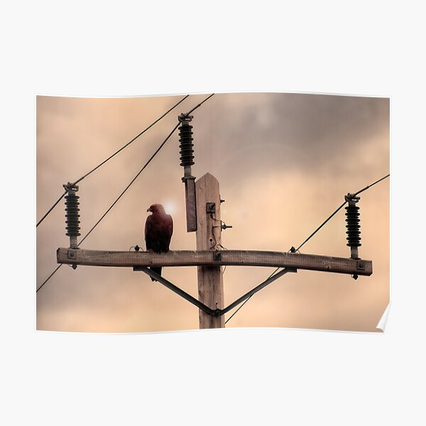 Electric Eagle Poster