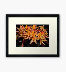 Flame Azalea at Dusk Framed Print