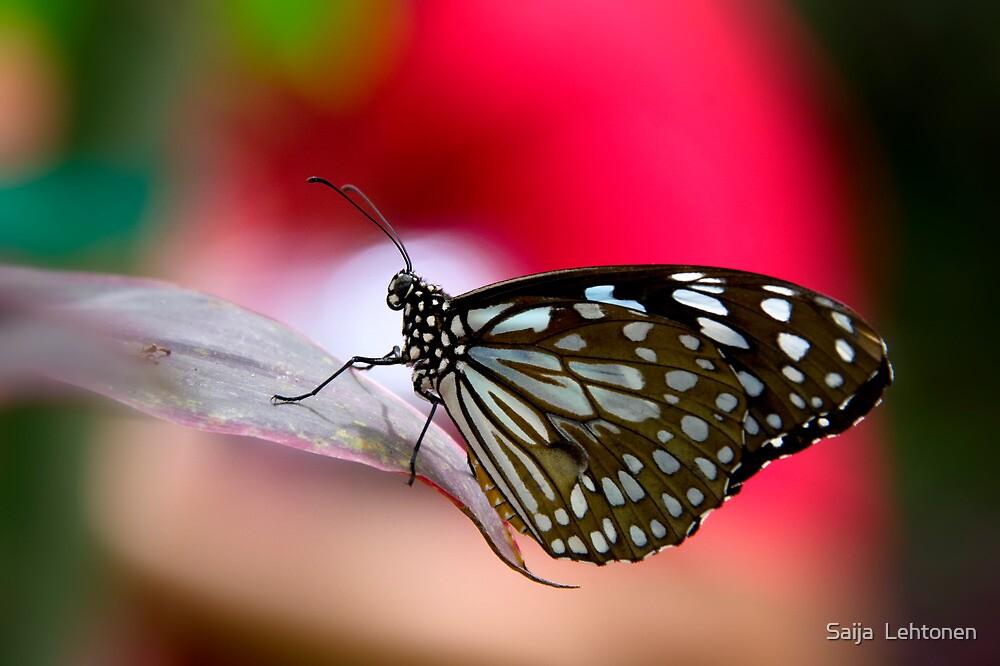 Paper Kite Butterfly  by Saija  Lehtonen