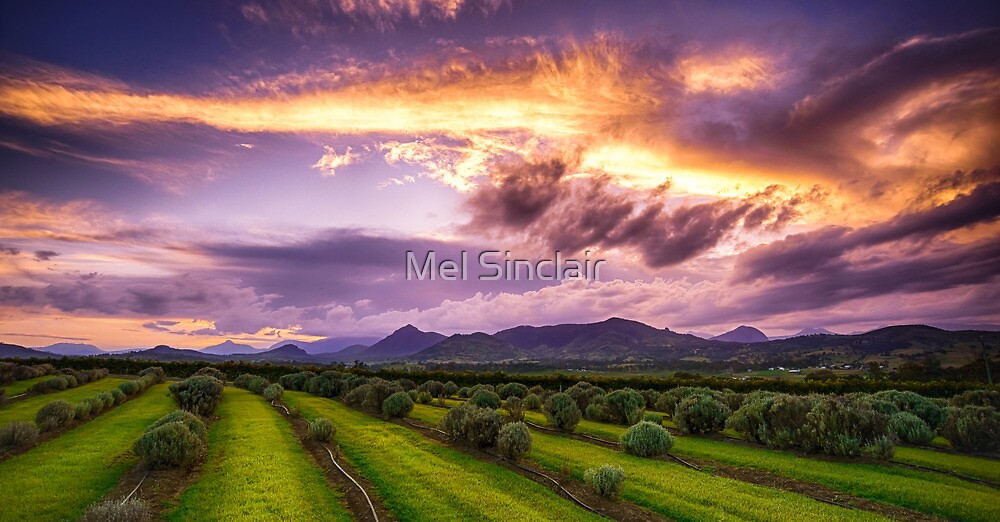 The Path Where You Walked  (will soon blossom again) by Mel Sinclair