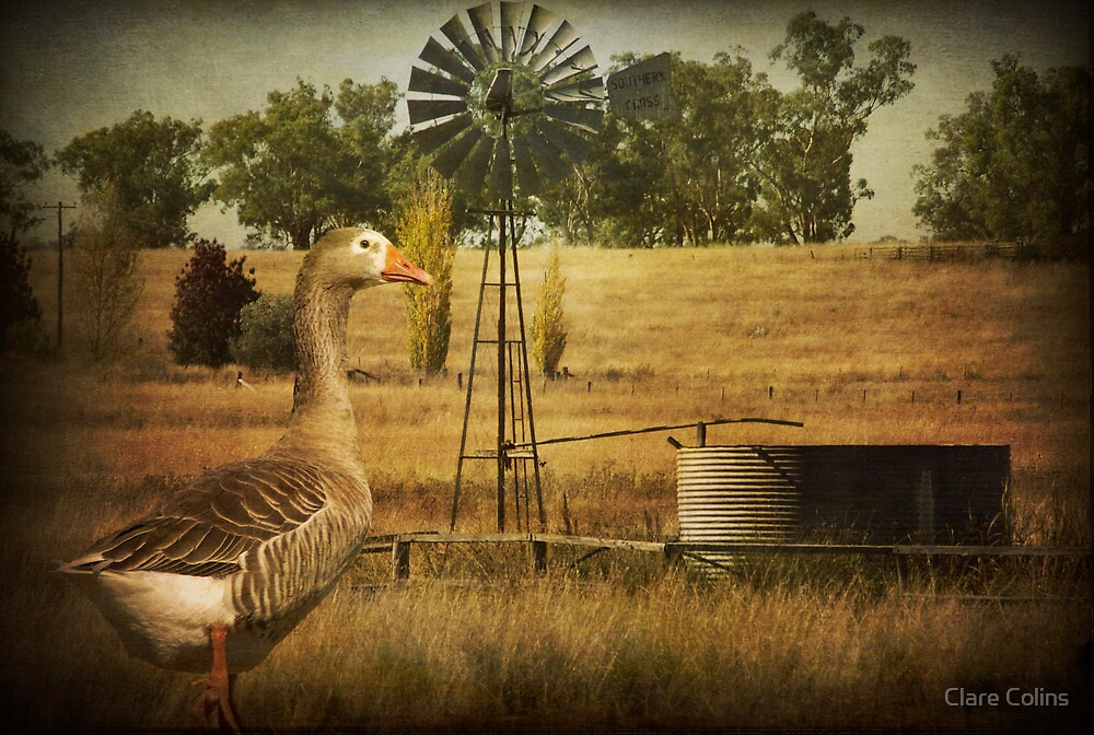 Toulouse the Goose was Thirsty by Clare Colins
