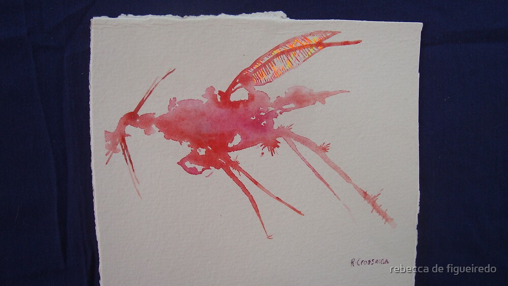small pink mozzy. Part of the INSECTAEI ALBUM by rebecca de figueiredo