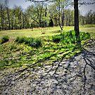 Tree Shadows by budrfli