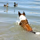 Dog chasing the Ducks by amyschuldies