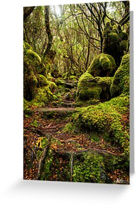 A Treacherous Path by Mieke Boynton