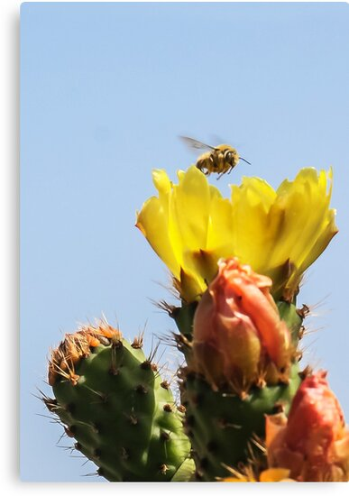 Buzzing In For A Landing! by Heather Friedman