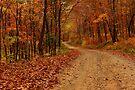 Arkansas Backwoods  by NatureGreeting Cards ©ccwri